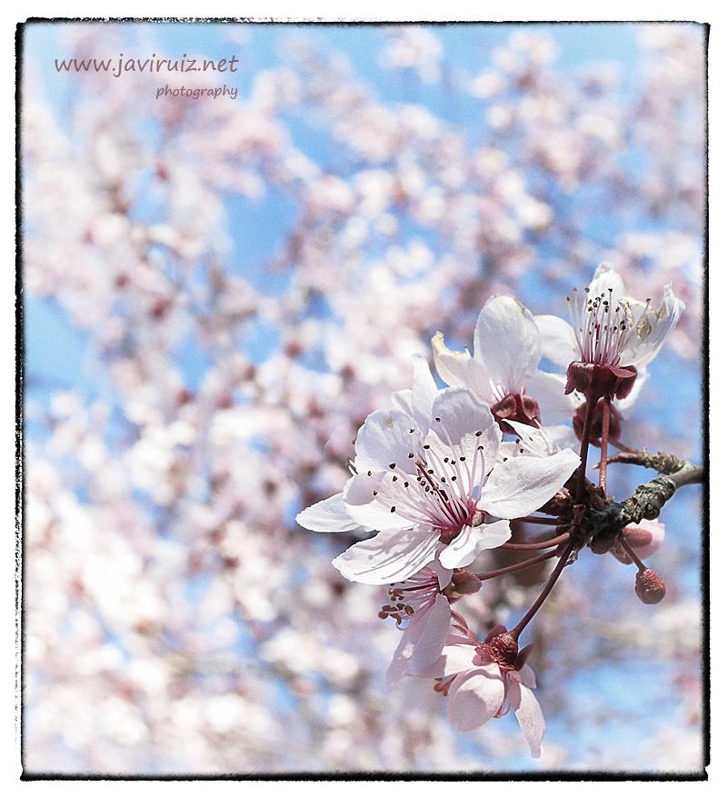 primavera-tardia