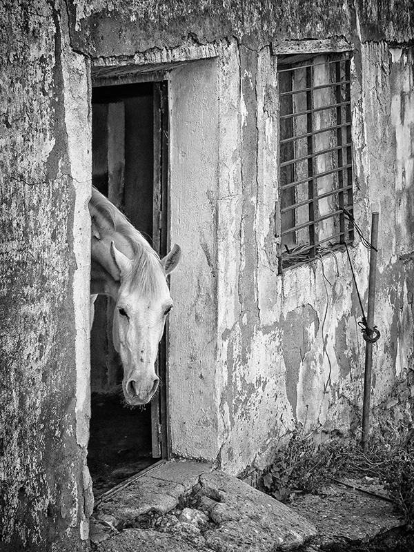 caballo-blanco