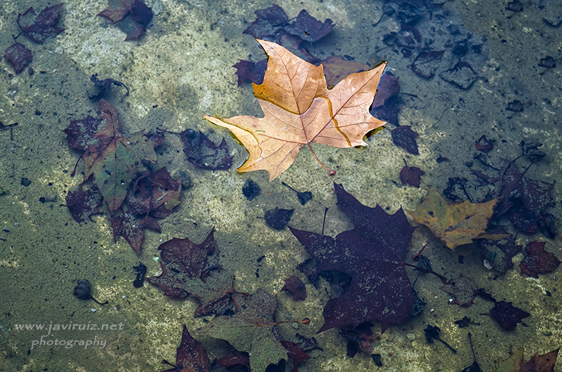 Early-autumn