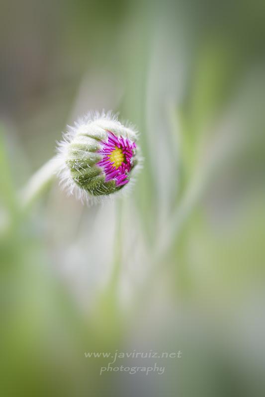 flower-cocoon
