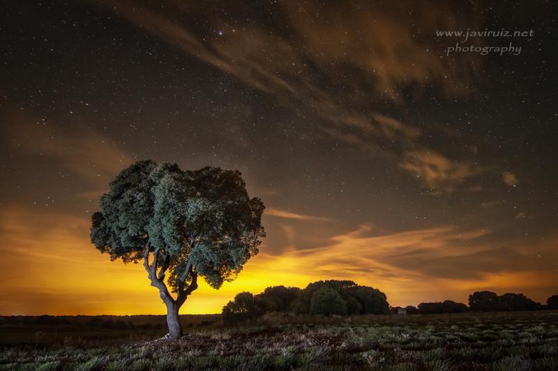 noche_dorada