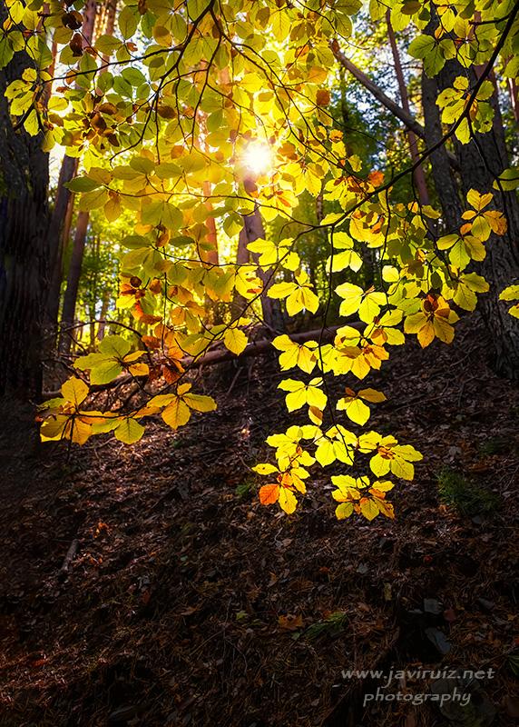 luces-de-otoño