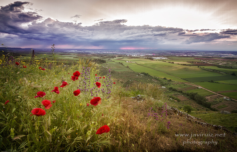 primavera-Corredor-Henares